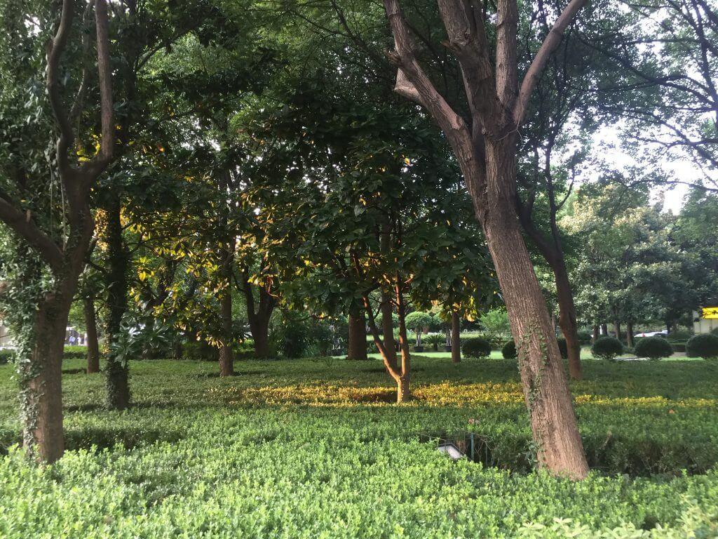 Grünfläche in der City Shanghai