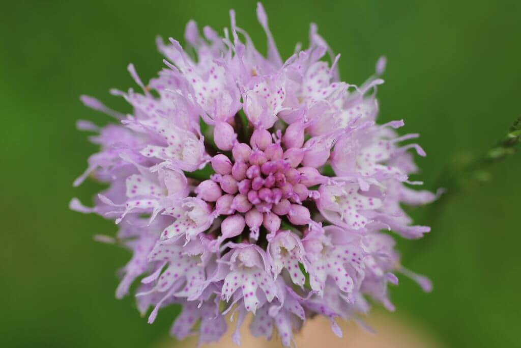 Filigrane Blüte