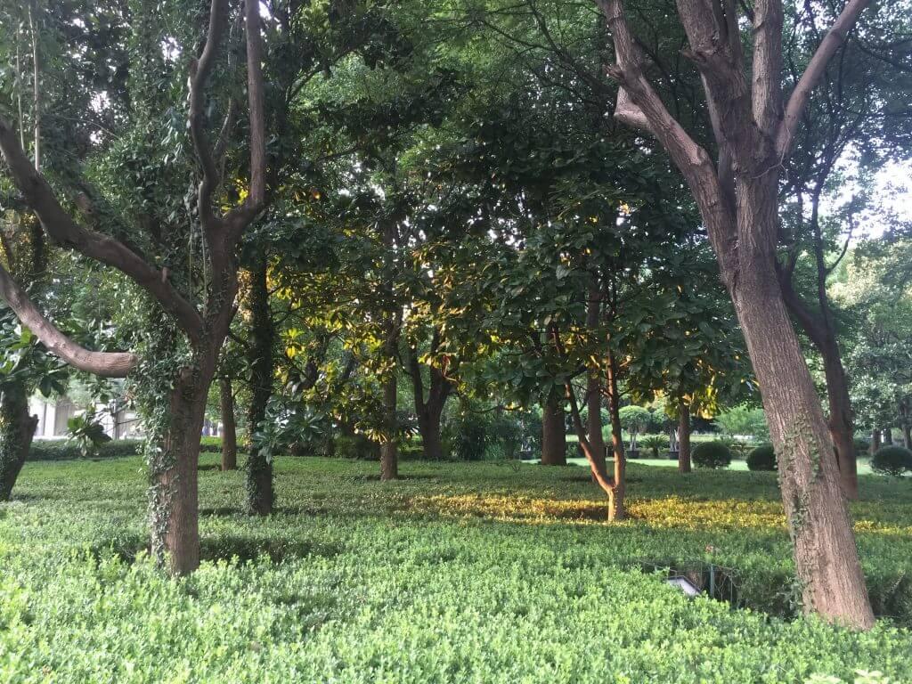 Grünfläche in Shanghai