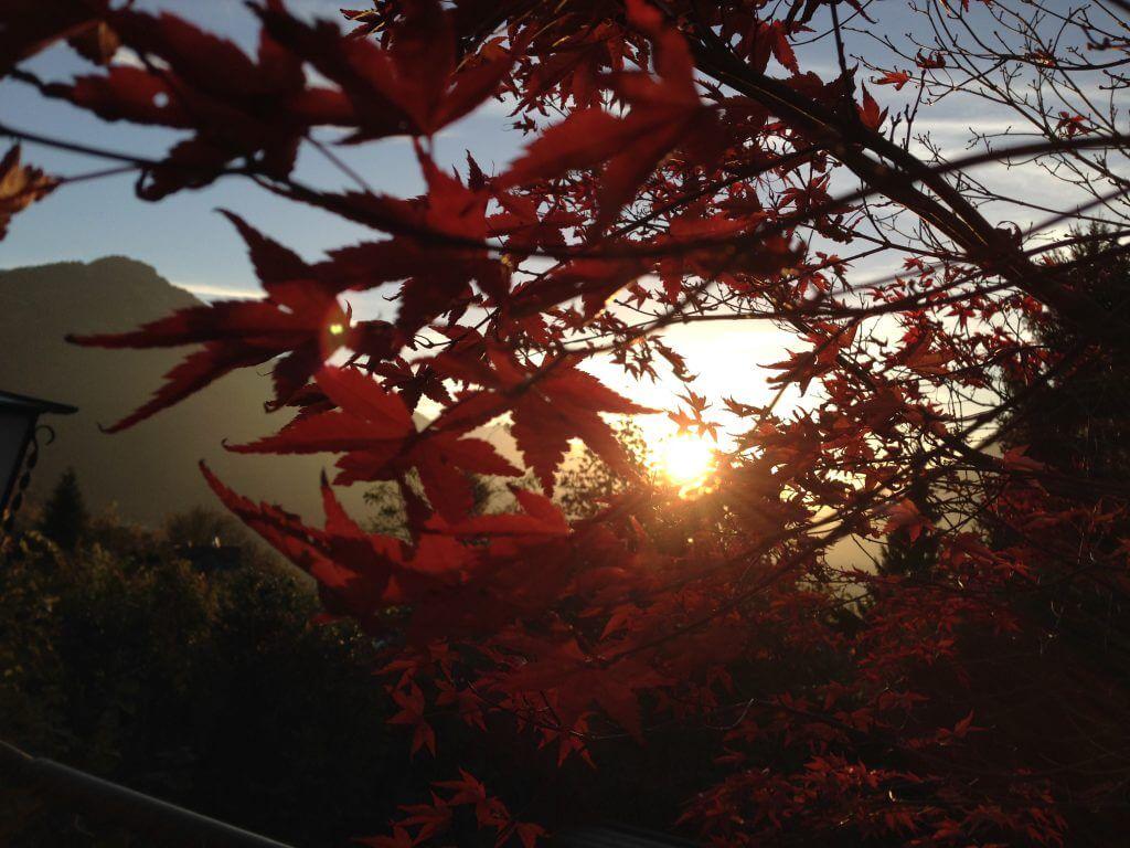Sonnenuntergang hinter Fächerahorn