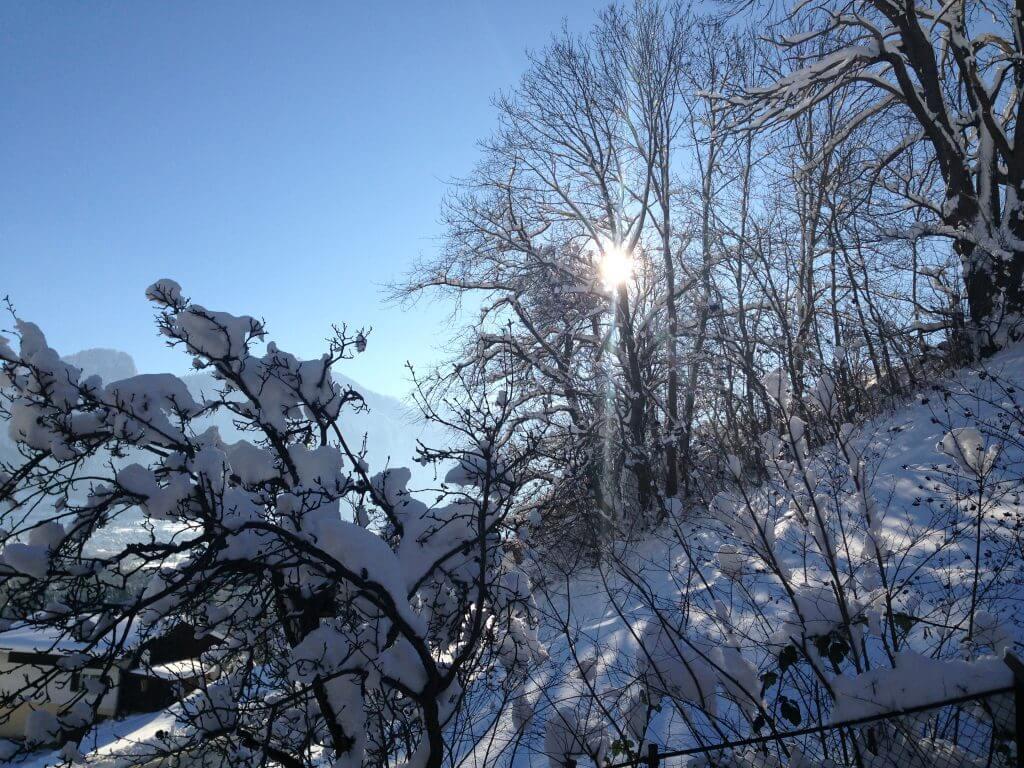 Mittagssonne im Winter
