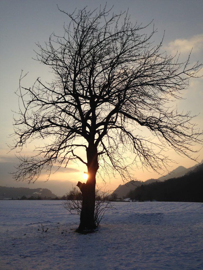 Winter-Sonnenuntergang hinter Baum